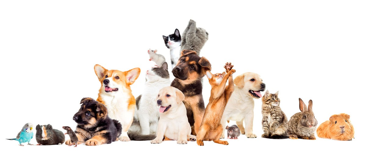 Distribuidora San José: ¿Cómo elegir la mascota ideal?