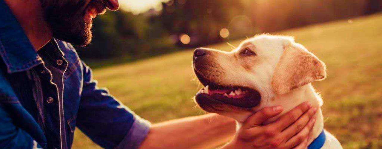 Distribuidora San José: Esterilización, la mejor opción para el control de la población animal