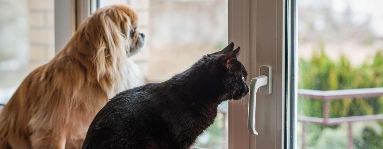Distribuidora San José: Cómo alimentar mascotas en cuarentena.